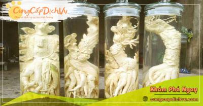 Mua bán Lá Đinh Lăng khô, củ đinh lăng điêu khắc ngâm rượu tại Phú Yên