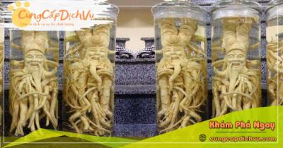 Mua bán Lá Đinh Lăng khô, củ đinh lăng điêu khắc ngâm rượu tại Vĩnh Phúc
