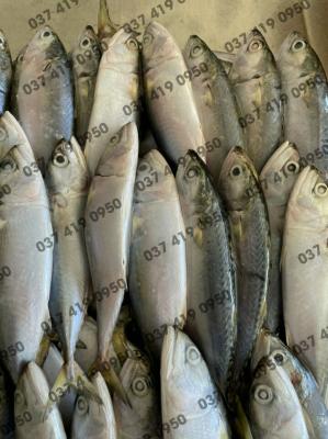 Nhà Cung Cấp Hải Sản Nhập Khẩu / Thịt Nhập Khẩu, Giá Sỉ Bán Buôn